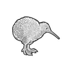 kiwi bird sketch vector image