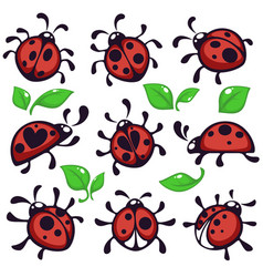 Ladybug or ladybird and leaves bug or insect vector