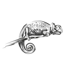 line sketch chameleon vector image