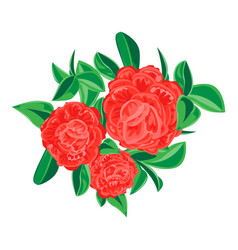 red camellia icon cartoon style vector image