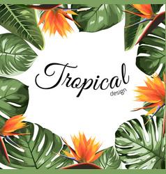 Tropical border frame with philodendron strelitzia vector