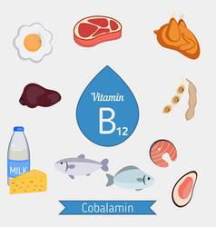 Vitamin b12 or cobalamin infographic vitamin b12 vector