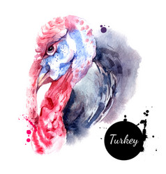 watercolor hand drawn turkey profile head vector image
