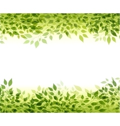 Green branches and leaves vector image vector image