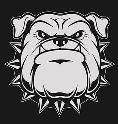 Head ferocious bulldog vector image vector image