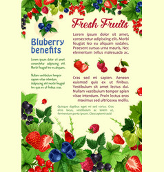 fresh berries and fruits poster vector image vector image