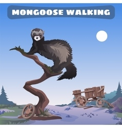 mongoose walking through the wild West vector image vector image