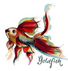 Beautiful goldfish isolated on white vector