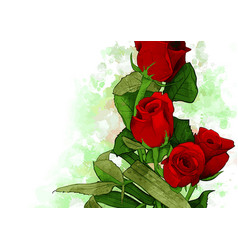 Bouquet red roses water color vector