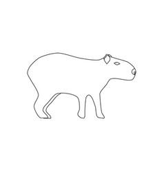Capybara animal vector