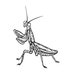 Mantis insect sketch engraving vector