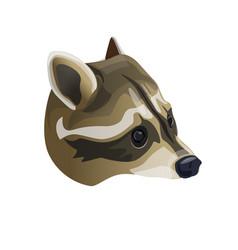 raccoon head portrait vector image
