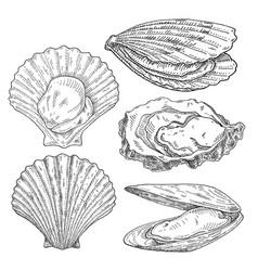 Scallop mussel and oyster vintage monochrome vector