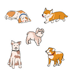 set dogs different breeds vector image