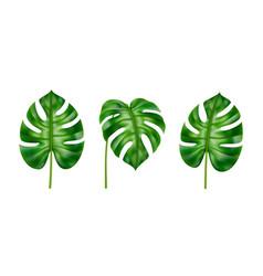 tropical leaves set monstera realistic foliage vector image