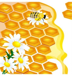 design of honeycomb and flowers vector image vector image