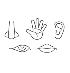 Five senses icons set isolated white vector image
