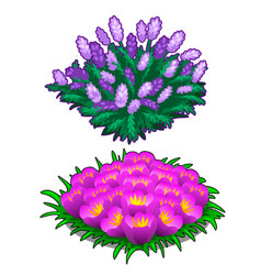 two beautiful flower beds pink and purple color vector image vector image