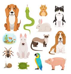 Big set different domestic animals cats vector
