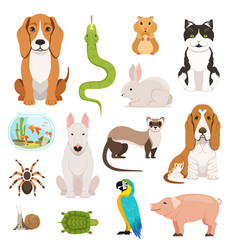 big set of different domestic animals cats vector image