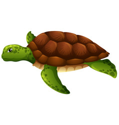 green sea turtle white background vector image