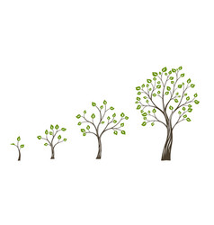 Green tree growth eco concept tree life cycle vector