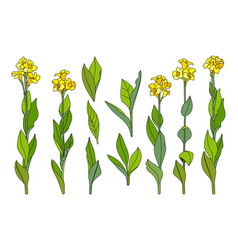 Hand drawn plant clipart vector