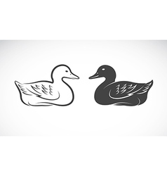 image an duck vector image