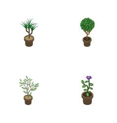 Isometric flower set of tree houseplant flower vector