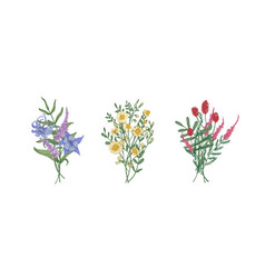 bundle of bouquets of gorgeous meadow flowers and vector image