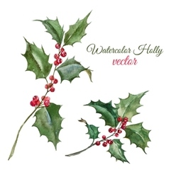 Christmas holly flower vector