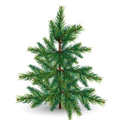 Evergreen tree on a white background vector