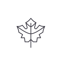 maple leaf line icon concept maple leaf flat vector image