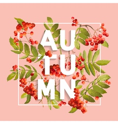 Rowanberry Floral Background Autumn Design vector image vector image