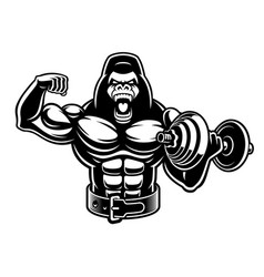 A muscled gorilla with dumbbell vector
