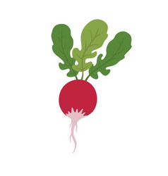 Radish vegetable image vector