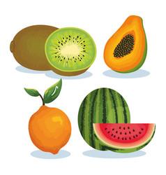 set tropical fresh fruits vector image
