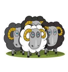 Stock herd of rams vector