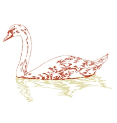 swan on surface vector image