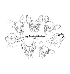 dog breed chihuahua set vector image vector image