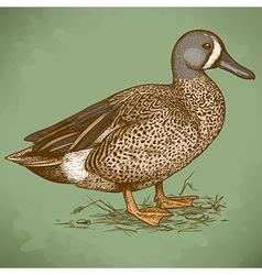 engraving duck retro vector image vector image