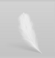 Birds white plume realistic vector