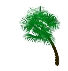 Green palm tree at an angle isolated on white vector image