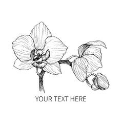 hand drawn black outline orchid on a white vector image