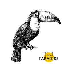hand drawn sketch black and white vintage exotic vector image