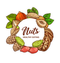 Nuts sketch peanut legume beans almonds walnuts vector
