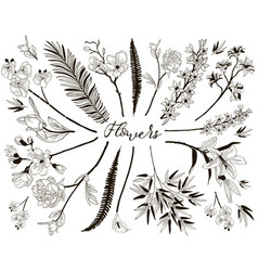big collection of floral design elements vector image