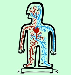 human circulatory system vector image