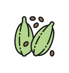 Cardamom spice flat color line icon isolated vector
