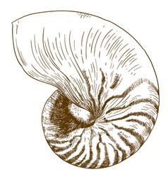 engraving drawing nautilus pompilius vector image